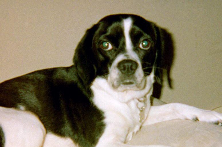 Ye Olde Family Dog, Maddie